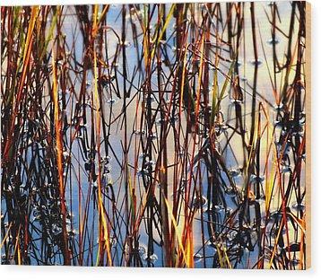 Marshgrass Wood Print by Karen Wiles