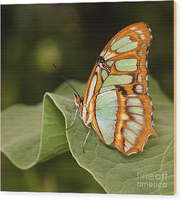 marvelous Malachite Wood Print by Ruth Jolly