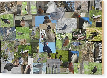 Maryland Birds Wood Print by Tom Ernst