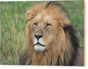 Masai Mara Lion Portrait    Wood Print