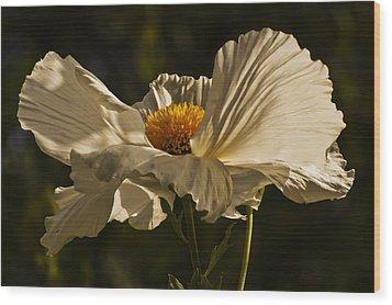 Matilija Poppy Wood Print by Lee Kirchhevel