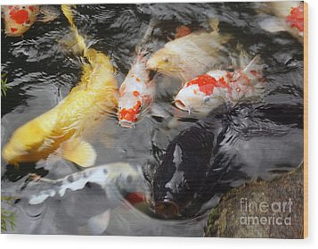 Wood Print featuring the photograph Matsue Koi by Cassandra Buckley