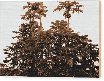 Maui Coconut Palms Wood Print by J D Owen