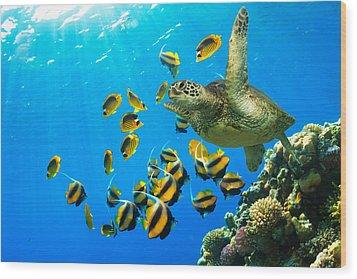 Maui Cruzer Wood Print