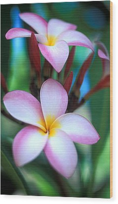 Maui Plumeria Wood Print by Kathy Yates
