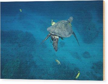 Maui Sea Turtle Cleaning Station Wood Print
