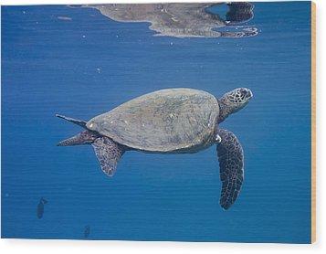Maui Sea Turtle Deep Blue Wood Print