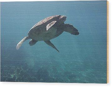 Maui Sea Turtle Dives Wood Print