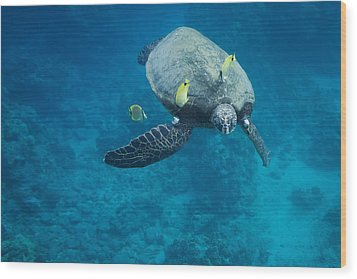 Maui Sea Turtle Faces Us Wood Print