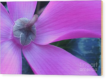 Mauve Cyclamen Wood Print by Kaye Menner