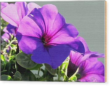 Mauve Petunia Trio Wood Print by Danielle  Parent