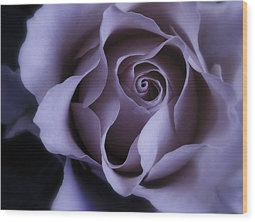 May Dreams Come True - Purple Pink Rose Closeup Flower Photograph Wood Print
