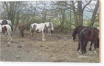 May Hill Ponies 1 Wood Print by John Williams