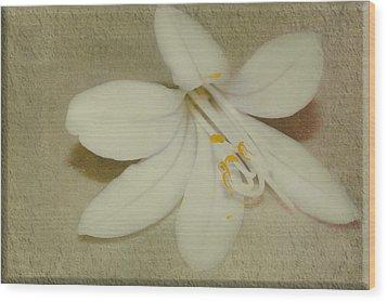 Maybelline Wood Print by Elaine Teague