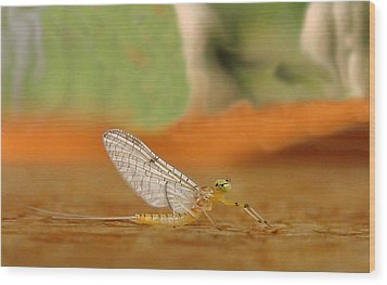 Mayfly Art Wood Print by Thomas Young