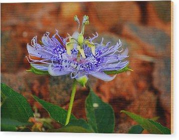 Maypop Flower Wood Print by Adam LeCroy