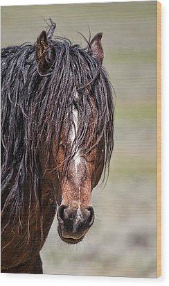 Mccullough Peaks Stallion Wood Print by Jana Thompson