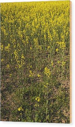 Meadow Of Rapes Wood Print by Svetlana Sewell