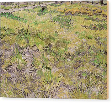 Meadow With Butterflies Wood Print by Vincent Van Gogh