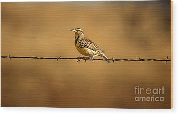 Meadowlark And Barbed Wire Wood Print by Robert Frederick