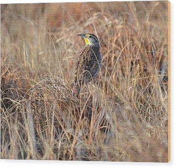 Meadowlark In Grass Wood Print