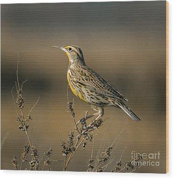 Meadowlark On Weed Wood Print