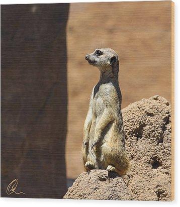 Meerkat Lookout Squared Wood Print by Chris Thomas