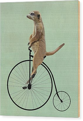 Meerkat On A Black Penny Farthing Wood Print by Kelly McLaughlan