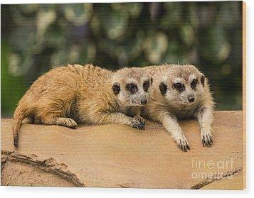 Meerkat Resting On Ground Wood Print by Tosporn Preede