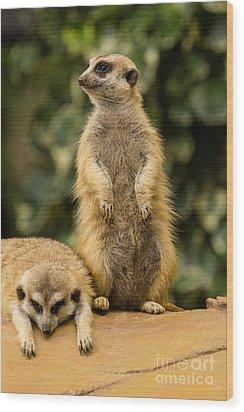 Meerkat Wood Print by Tosporn Preede