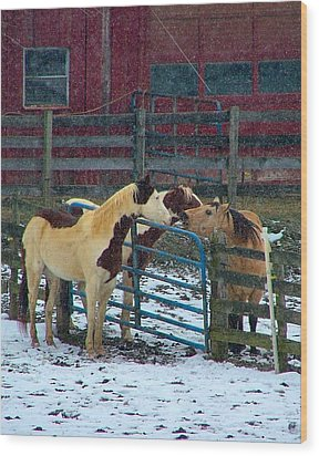 Meeting Of The Equine Minds Wood Print by Julie Dant