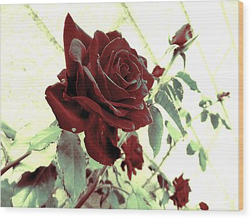 Melancholy Rose Wood Print by Shawna Rowe