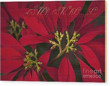 Mele Kalikimaka - Poinsettia  - Euphorbia Pulcherrima Wood Print by Sharon Mau