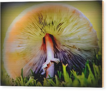Mellow Yellow Mushroom Wood Print by Karen Wiles