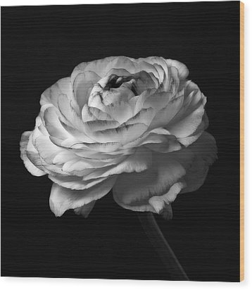 Black And White Roses Flowers Art Work Macro Photography Wood Print