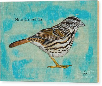 Melospiza Melodia Wood Print by Stefanie Forck