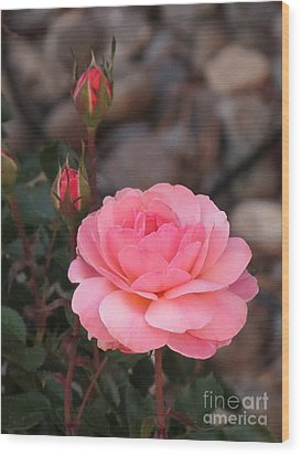 Memorial Day Rose Wood Print by Phyllis Kaltenbach