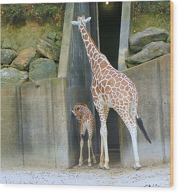 Wood Print featuring the photograph Memphis Girraffe by Shirley Moravec