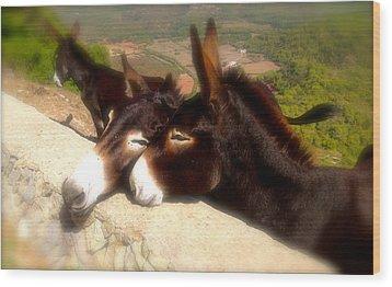 Menorcan Donkeys Wood Print by John Colley