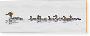 Merganser Family Wood Print by Brent Ander