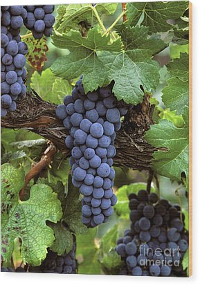 Merlot Clusters Wood Print by Craig Lovell
