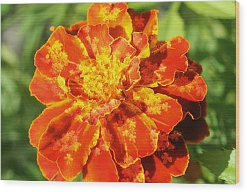 Merry Marigold Wood Print