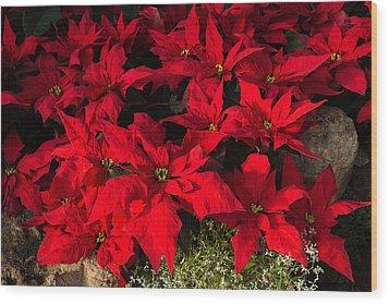 Merry Scarlet Poinsettias Christmas Star Wood Print