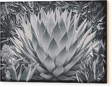 Mescal Agave Wood Print by Kelley King
