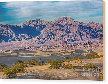 Mesquite Dunes And Mountains Wood Print