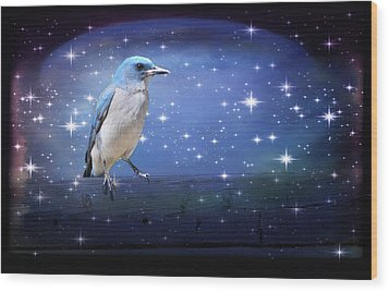 Mexican Blue Jay Wood Print