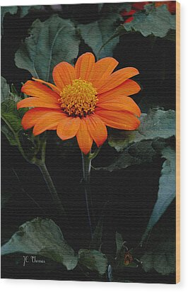 Wood Print featuring the photograph Mexican Sunflower by James C Thomas