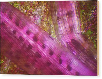 Wood Print featuring the photograph Microscope - Colorful Veg 2 by Afrison Ma