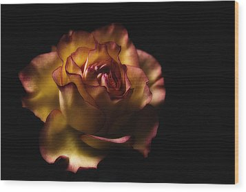 Midnight Rose Wood Print by Kim Andelkovic