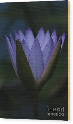 Midnight Water Lily Wood Print